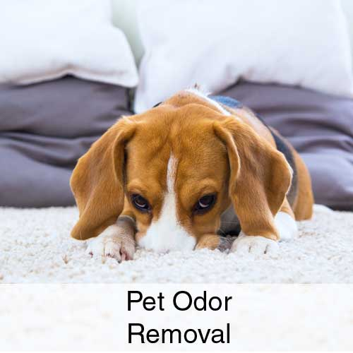 Pet Odor Removal