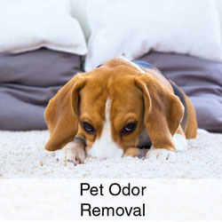 Pet Odor Removal
